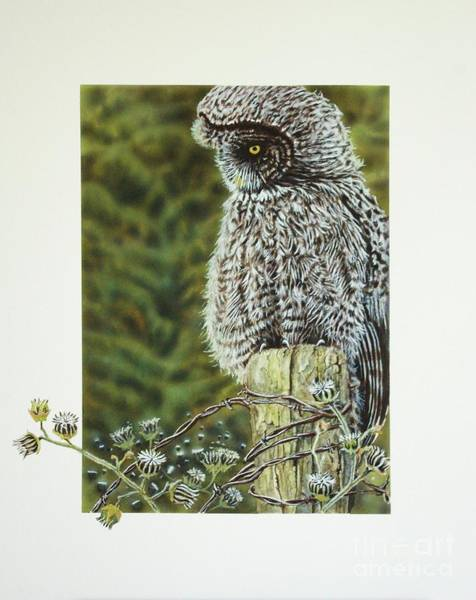 Painting - Great Grey Owl by Greg and Linda Halom