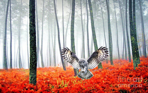 The Grey Photograph - Great Grey Owl by Laura D Young