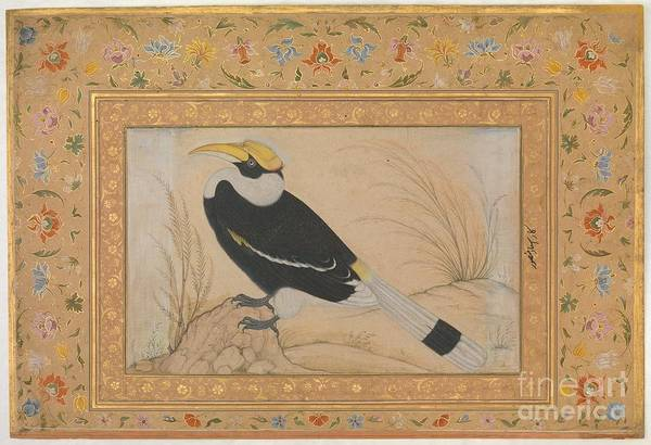 Painting - Great Hornbill by Celestial Images