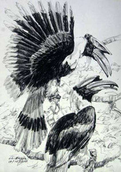 Hornbill Drawing -  Great Hornbill  by Chaitawee Bubpa