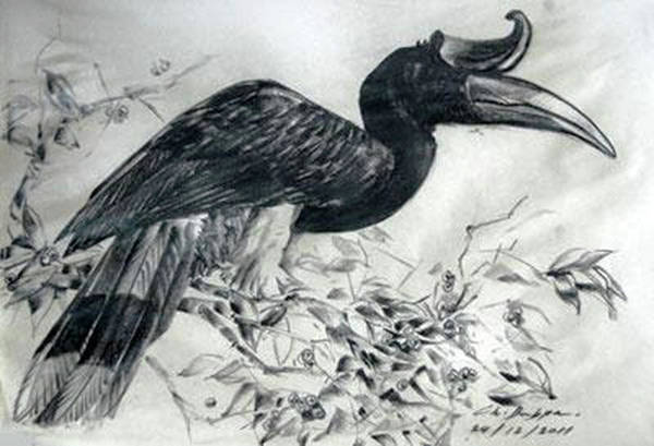 Hornbill Drawing - Great Hornbill Feeding  by Chaitawee Bubpa