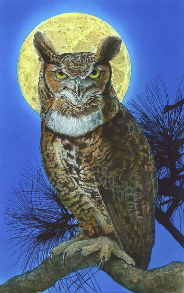 Great Horned Owl 2 Art Print