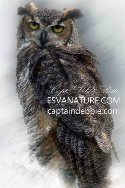 Photograph - Great Horned Owl by Captain Debbie Ritter