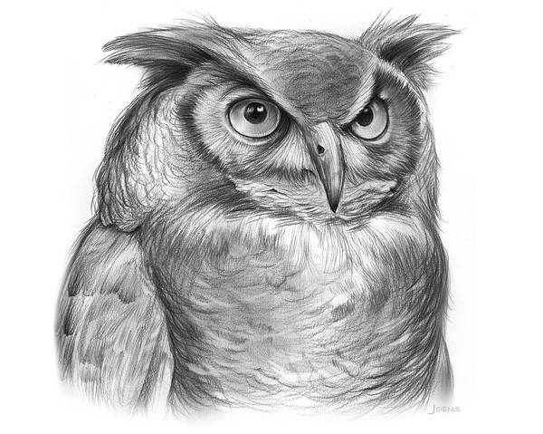 Horned Wall Art - Drawing - Great Horned Owl by Greg Joens