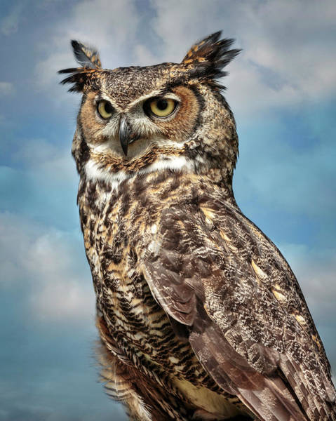 Photograph - Great Horned Owl In The Clouds by Wes and Dotty Weber