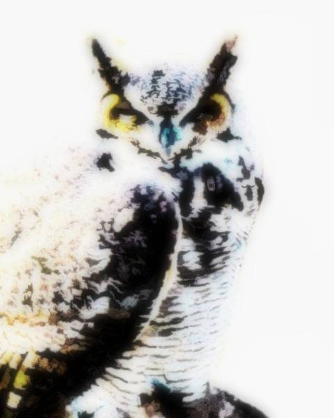 Digital Art - Great Horned Owl by John Feiser