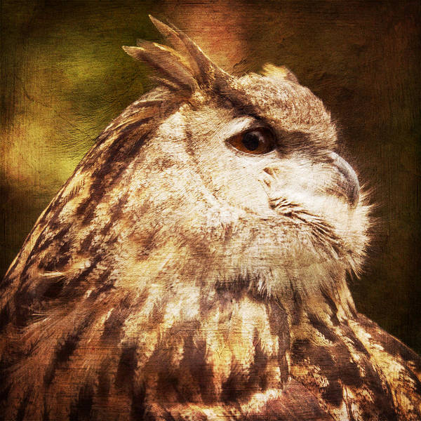 Bird Watching Digital Art - Great Horned Owl Painting Effect by Heidi Hermes