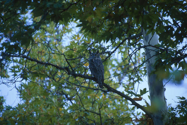 Manzana Wall Art - Photograph - Great-horned Owl - San Rafael Wilderness by Soli Deo Gloria Wilderness And Wildlife Photography