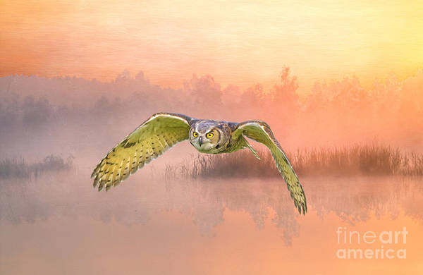 Hoot Wall Art - Photograph - Great Horned Owl Soars by Laura D Young