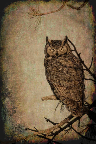 Wall Art - Photograph - Great Horned Owl With Textures by Dawn Key