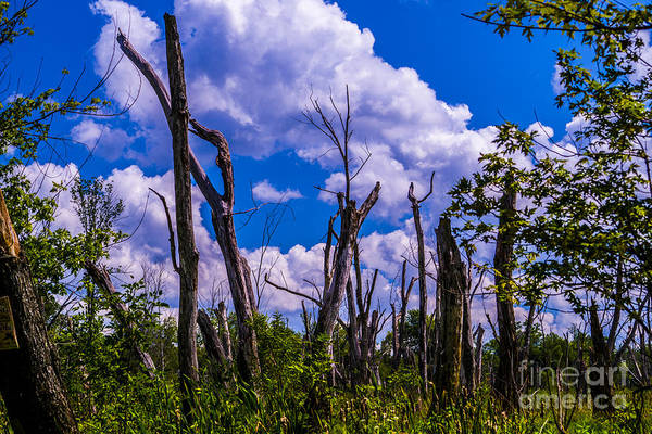 Jasmin Photograph - Great Meadow by Jasmin Hrnjic