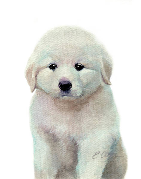 Pyrenees Painting - Great Pyrenees Puppy by Emily Olson