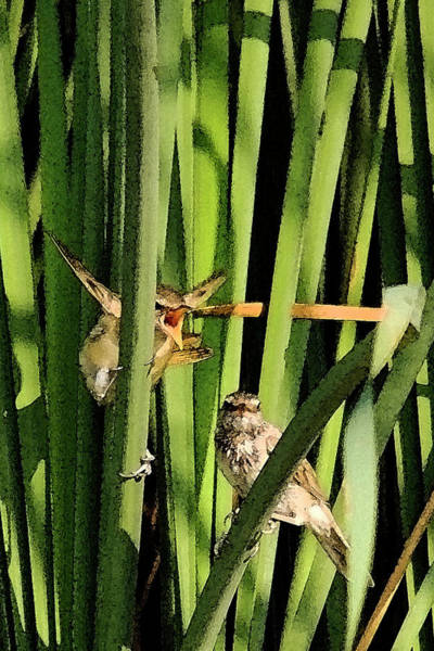 Photograph - Great Reed Warbler by Cliff Norton