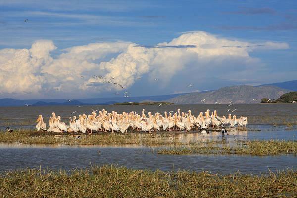 Photograph - Great Rift Birds by Aidan Moran