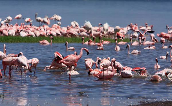 Photograph - Great Rift Lake Flamingos  by Aidan Moran