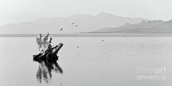 Great Lakes Photograph - Great Salt Lake by Delphimages Photo Creations