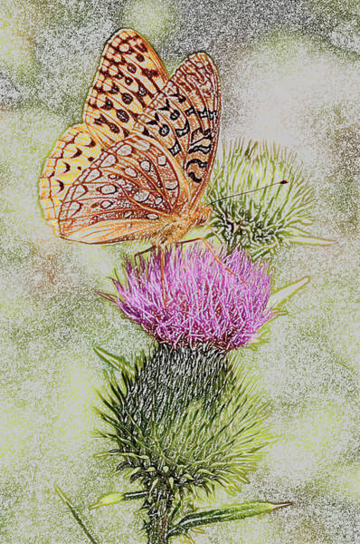Butterfly On Flower Digital Art - Great Spangled Fritillary As Colored Pencil by Frank LaFerriere