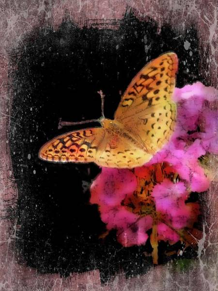 Photograph - Great Spangled Fritillary Butterfly. by Rusty R Smith