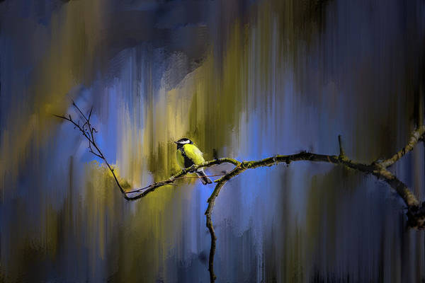 Photograph - Great Tit On Branch #h3 by Leif Sohlman