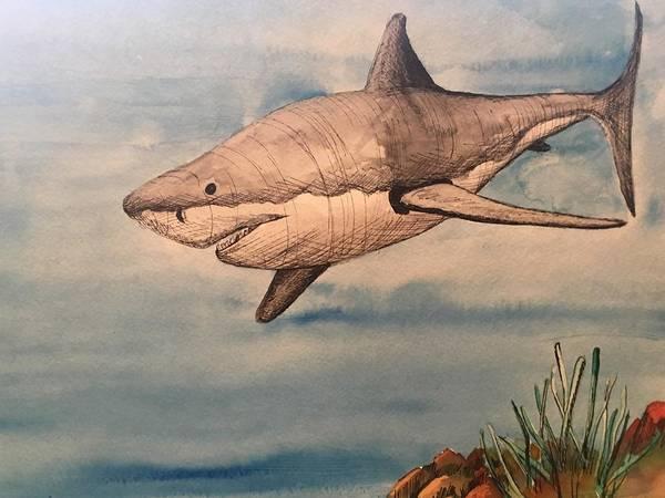 Painting - Great White Shark by Mastiff Studios