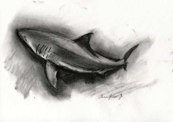 Great Painting - Great White Shark Drawing by Juan Bosco