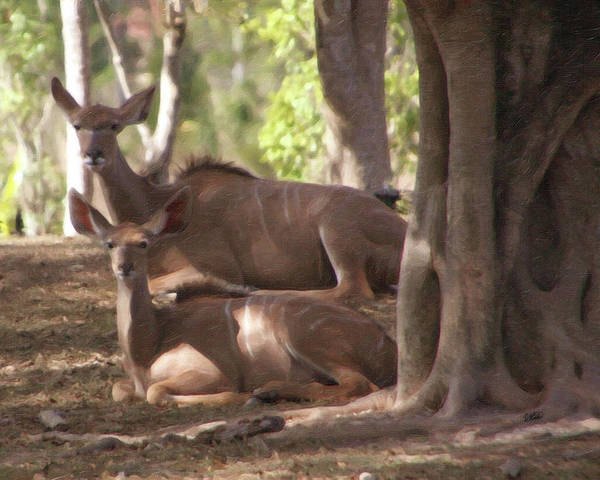 Painting - Greater Kudu Females - Rdw001502 by Dean Wittle