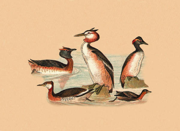 Mixed Media - Grebes by Eric Kempson