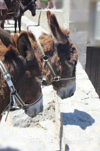 Photograph - Greece's Donkeys by Donna L Munro