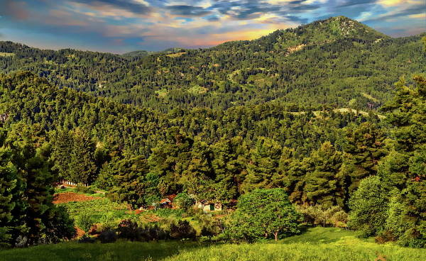 Photograph - Greek Forest Scene by Anthony Dezenzio