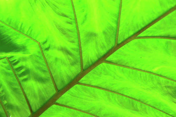 Photograph - Green Abstract No. 5 by Helen Northcott