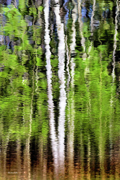 Photograph - Green Abstract Tree Reflection by Christina Rollo