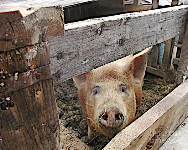 Pigpens Photograph - Green Acres by Faith Harron Boudreau