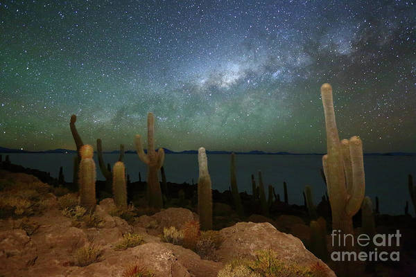 Photograph - Green Airglow And Cacti On Incahuasi Island Bolivia by James Brunker