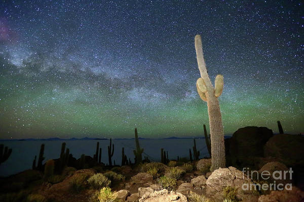 Wall Art - Photograph - Green Airglow And Cactus Incahuasi Island Bolivia by James Brunker