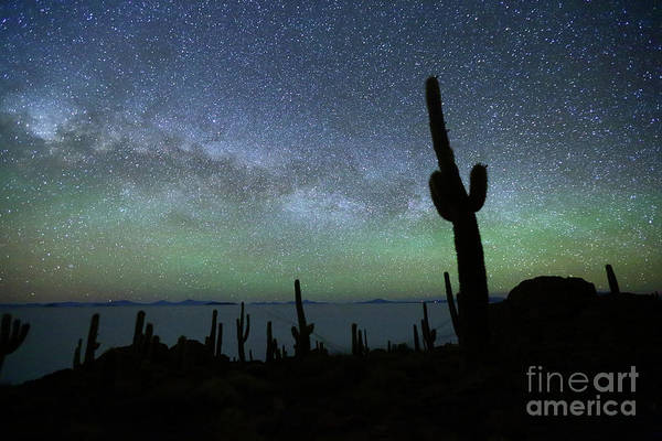 Wall Art - Photograph - Green Airglow And Cactus Silhouette Incahuasi Island Bolivia by James Brunker