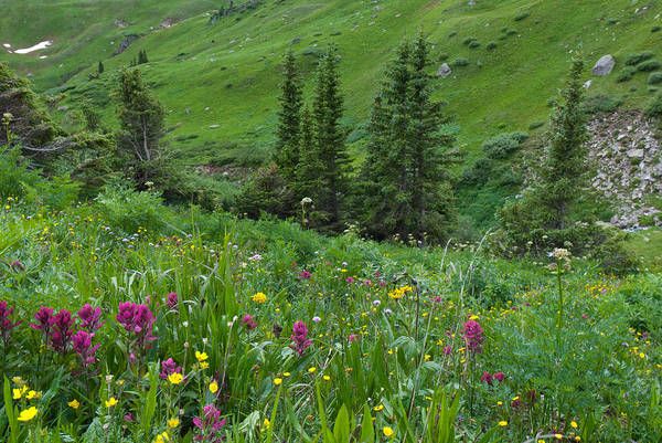 Photograph - Green Alpine Meadow by Cascade Colors
