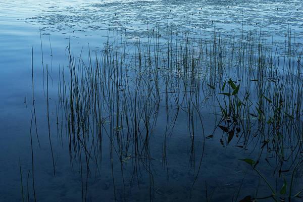Photograph - Green And Blue Serenity by Georgia Mizuleva