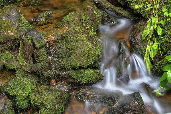 Photograph - Green And Mossy Water Flow by James BO Insogna