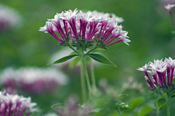 Photograph - Green And Pink by Lily K