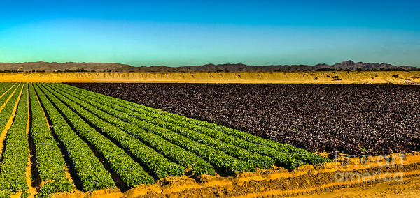 Yuma Photograph - Green And Red Salad Bowl by Robert Bales
