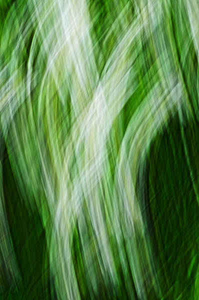 Photograph - Green And White Thatch by Dick Pratt