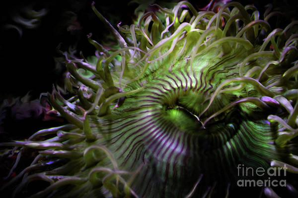 Green Anemone Art Print