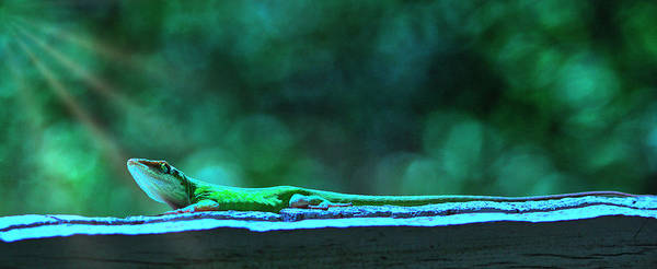 Digital Art - Green Anole Lizard by Randy Bayne
