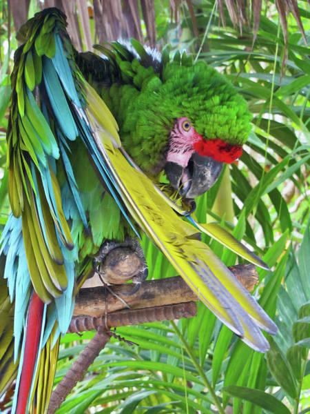 Photograph - Green Bahamas Parrot by Bob Slitzan