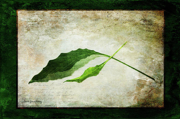 Photograph - Green Balance by Randi Grace Nilsberg