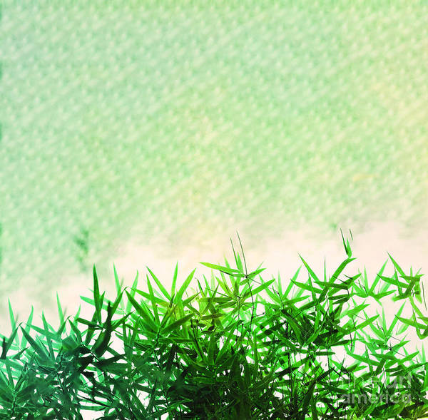 Digital Art - Green Bamboo by Tracey Everington