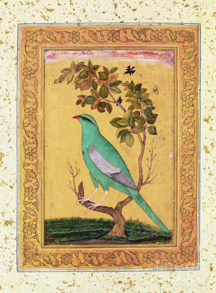 Wall Art - Painting - Green Bird, Mughal  by Indian School