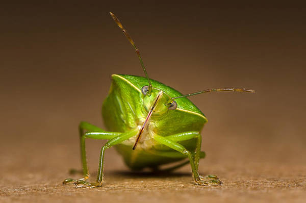 Wall Art - Photograph - Green Bug by Tin Lung Chao