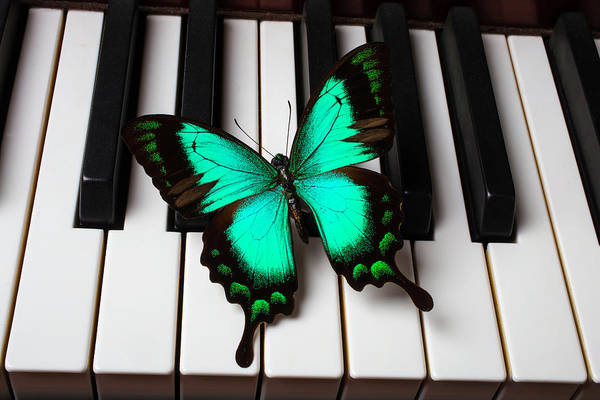 Wall Art - Photograph - Green Butterfly On Piano Keys by Garry Gay