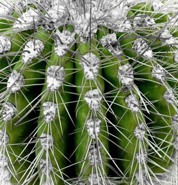 Wall Art - Photograph - Green Cactus by Frank Tschakert